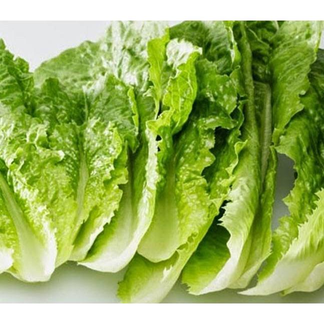 Manfaat Selada pada Diabetes yang mengalami patah Tulang